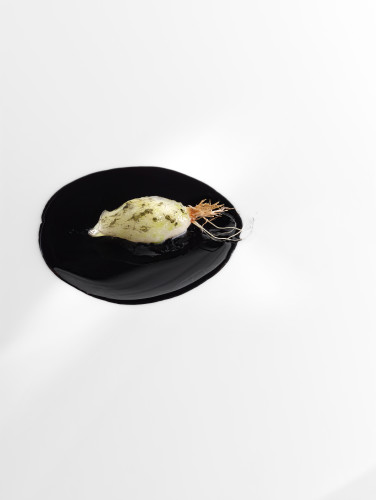 Chalota en salsa negra - esencia